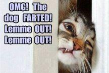 Pisică