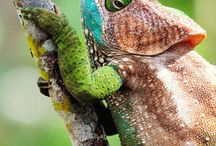 Amphibions, Insects & Reptiles