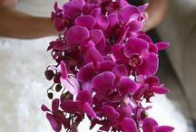Buquê de Noiva Orquídeas / Orquídeas nos buquês de Noiva. Uma escolha sofisticada que deixa os convidados surpresos e o Noivo ainda mais apaixonado! #primaveragarden #buquesdenoiva #casamento #ideiascasamento # florescasamento