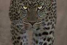 Animals / Such beauties <3