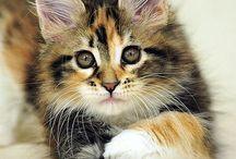 キュートな猫