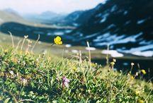 INSP: flowers