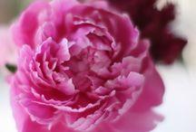 Flowers / by Lynn Donahue