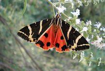 Κοιλάδα Πεταλούδων / Ρόδος Φυσική ομορφιά