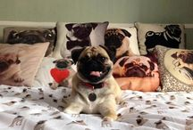 PUG / If you like pugs this is that place for you hope you enjoy xox