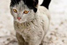 des chat avec des tâches étrange