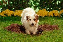 DOG FAQ's / Training Tips - Behaviors - Breeds - Health - Unique Facts http://www.preciouspawprints.com/dog-faqs/