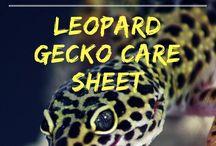 Gecko Stuff