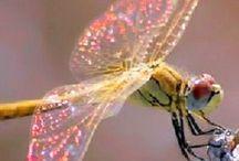 beautiful.bugs