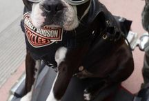 American Eagle / Harley Davidson