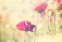 Flowery fields / Wild flowers / by Rochelle Mast