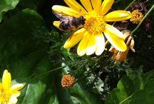 Flowers / Cada una , más maravillosa