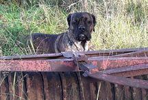 Hos Malin med Bonzo / Ungar o hund