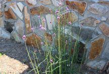 Our Garden / Enjoy our gardens throughout the seasons!