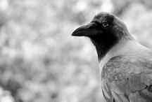 Bird / by Beth dos Santos