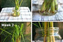 Indoor plants / Gardening
