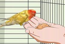 training animals & birds