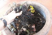 Ogrodnicze mikstury/kompost
