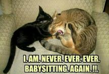 Funny Animal Memes / Funny animal memes hand picked from the Bapu.tv site.