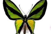 Papillons et autres bébêtes