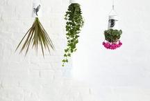 If I had a garden. / by Silvia Comesaña