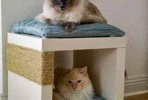 Katten ideetje