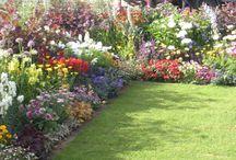 Dream Yard