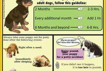 Puppy Dog Tips & Training