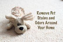 Hinweise zum Putzen
