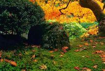 紅葉 (Autumn leaves)