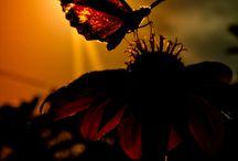 pretty / by Lindsey Sturman