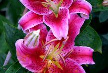 Blumen Juli
