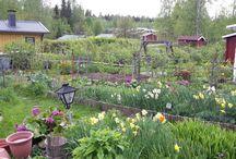 My mom ' s colony garden cottage