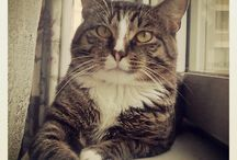 Markus cat! / My cat Markus!