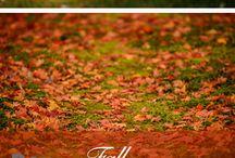 Seasonal - Fall