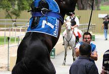 :. Horse Racing .: