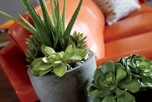 Mini gardens / Succulent arrengments, nice succulent projects, vertical gardens. Indoor and outdoor flower arrengments