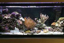 35g reef tank