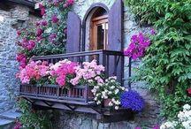 квіти будинки