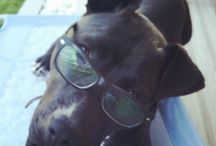 My crazy dog!!