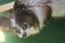 Ellen / Min hund