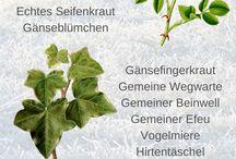 Kalender Kräuter