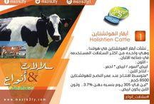 سلالات & انواع /  سلالات_وانواع أحد خدمات شركة #مزرعتى هتعرفك أكثر على سلالات الماشية و أنواع الأعلاف المختلفة