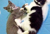 Pussy Molly / Kitten