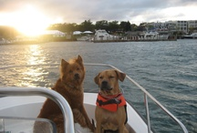 Charlevoix Dogs / by Charlevoix Visitors Bureau