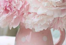 Fiori - květiny