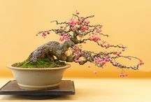 Bonsai y plantas y decoración