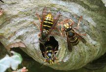 Bristol Wasp Control