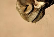 Animals ♥ / by Kourtney Cromwell