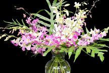 Elegant Orchids / Orchid's Delight A dazzling array of seasonal colors, shapes and sizes awaits those who are gifted with this arrangement. Cascading sprays of assorted dendrobium orchids are the signature symbol of Hawaii, reflecting the elegance and beauty of the islands.